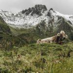Kuh-alpen