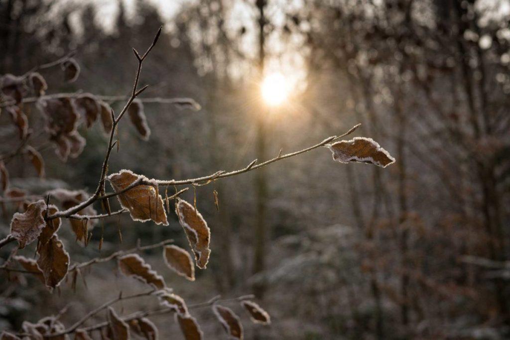 wandern-im-winter-trekkinglife-sonnenschein-eis