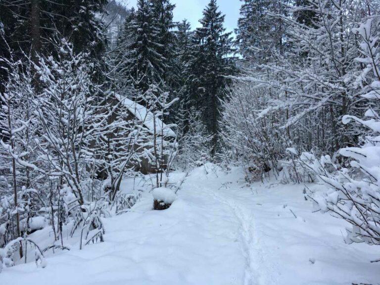 Abends grün, morgens weiß - Winterwanderung mit Zelt 7