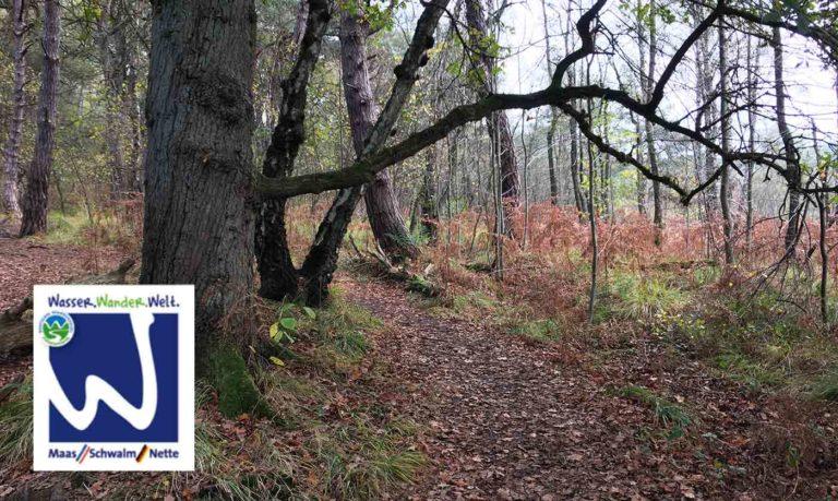 Birgeler-Urwald-Wandern-nrw-trekkinglife-01