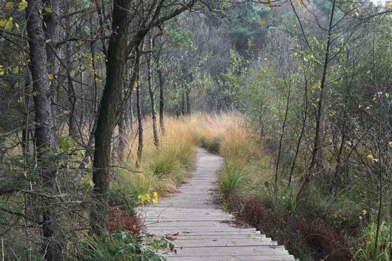 Wandern im Birgeler Urwald auf Holzstegen