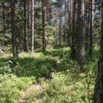 wandern-schweden-trekking-soermlandsleden-21