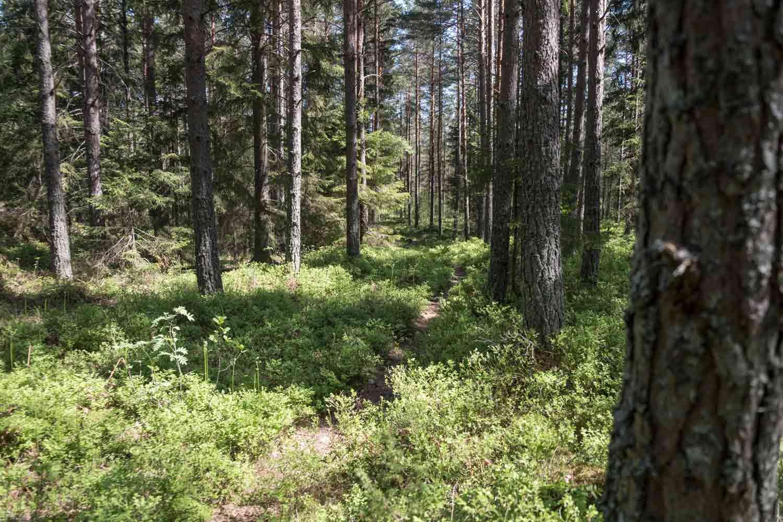 wandern-schweden-trekking-soermlandsleden-29