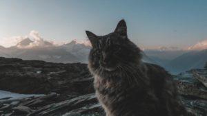 Breithorn-Schweiz-Alpen-Gastartikel-02