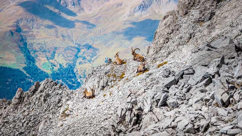 wandern-in-den-alpen-piz-lad-vinschgau-02