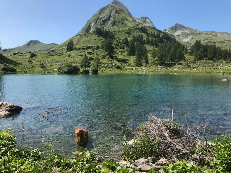 Schesaplanahütte - Älplibahn Malans (Graubünden - Etappe 4) 12