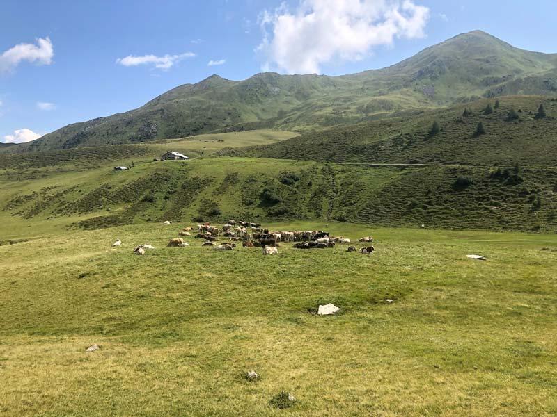 Schesaplanahütte - Älplibahn Malans (Graubünden - Etappe 4) 8