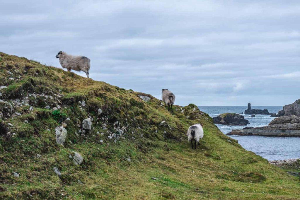 Schafe Port Donegal - Sehenswürdigkeiten