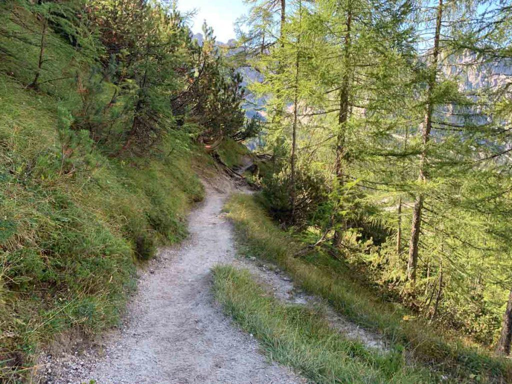 Latschenwald während des Abstieges vom Watzmann