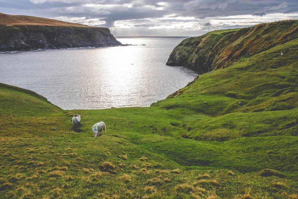Zwei Schafe vor der Bucht des Silver Strand Beach