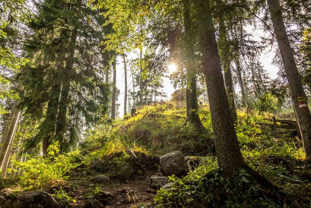 Im Waldstück kurz vor der Kührointalm blitzt die Sonne durch die Bäume