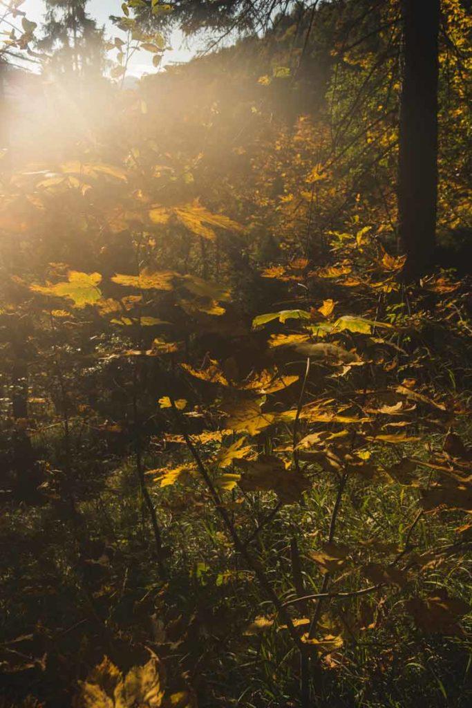 Während des Abstiegs vom Watzmannhaus über die Kührointalm blitzt die Sonne durch die Bäume