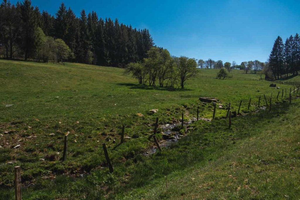 Wanderung rund um Monschau mit Blick auf den Wald und Weideflächen
