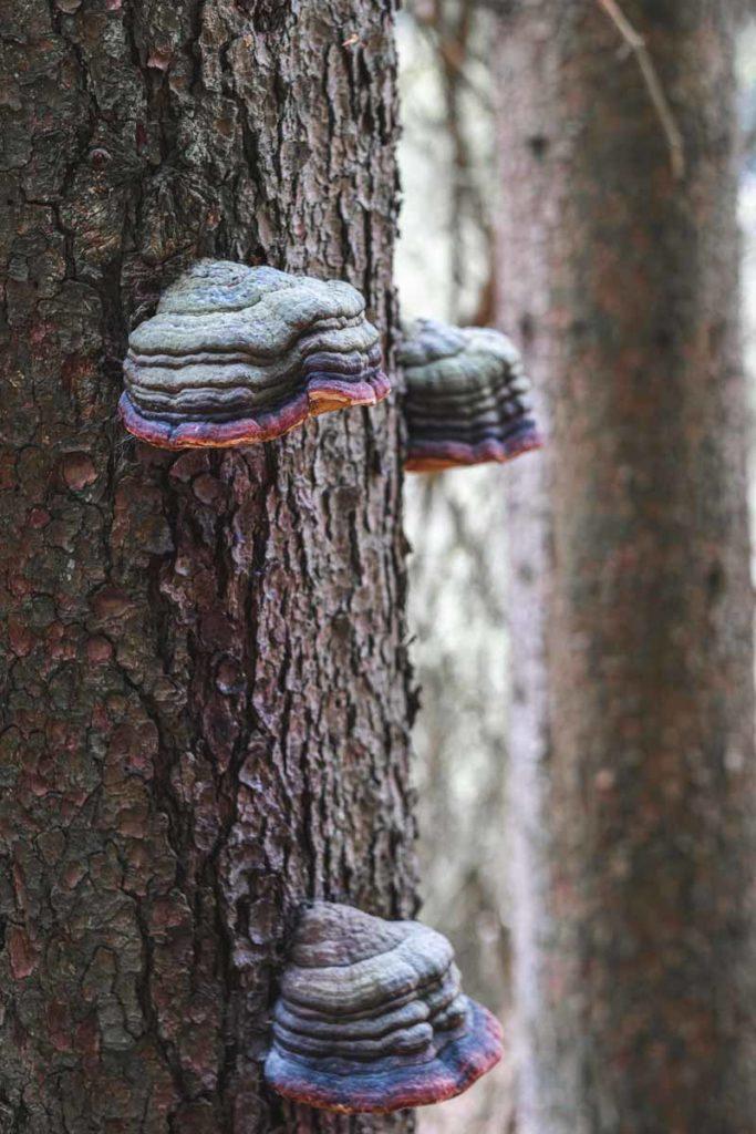 Bunte Pilze an einem Baum
