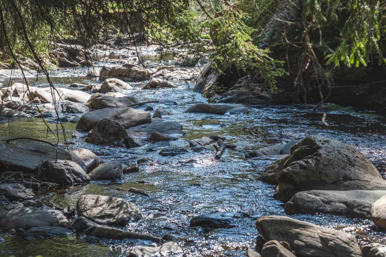 Der kleine Fluss Rur liegt sehr idyllisch im Wald