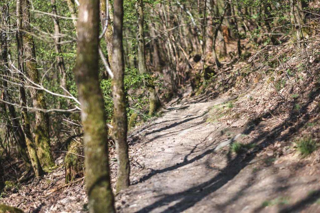 Wanderweg durch den Wald bei Monschau