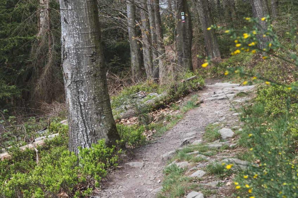 Wanderweg auf der Klosterroute bei Monschau