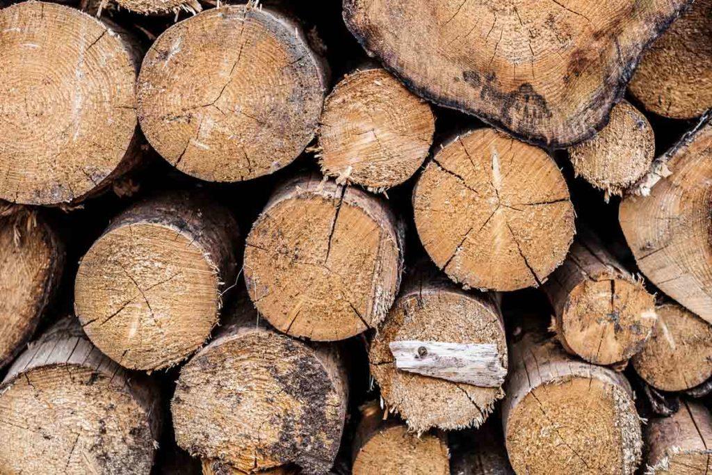 Frisch gefälltes Holz