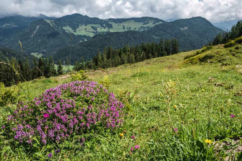 Koasa Trail – alle Infos zum Wandern am Wilden Kaiser 2