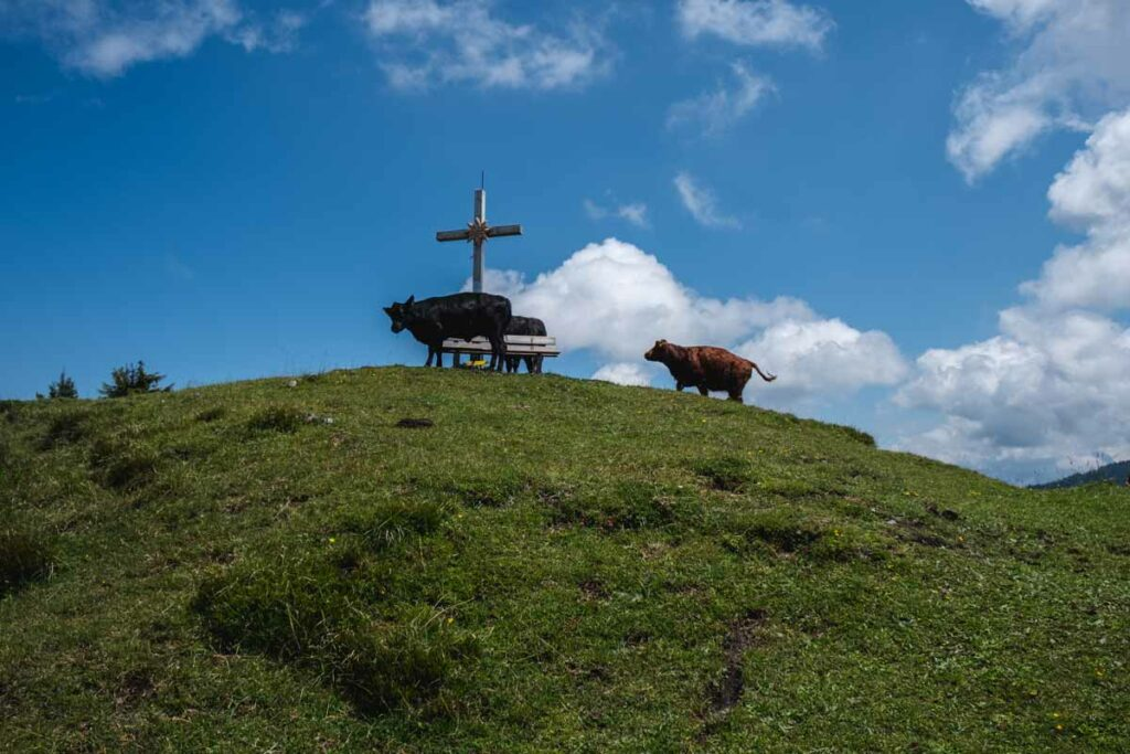 Kühe an einem Gipfelkreuz