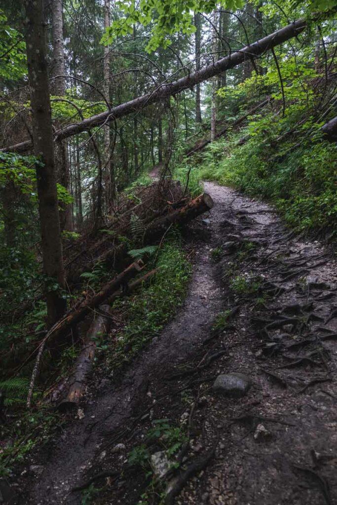 Jägersteig - ein schmaler Bergweg