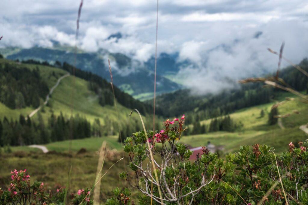 Aussicht vom Koasa Trail - Etappe 4