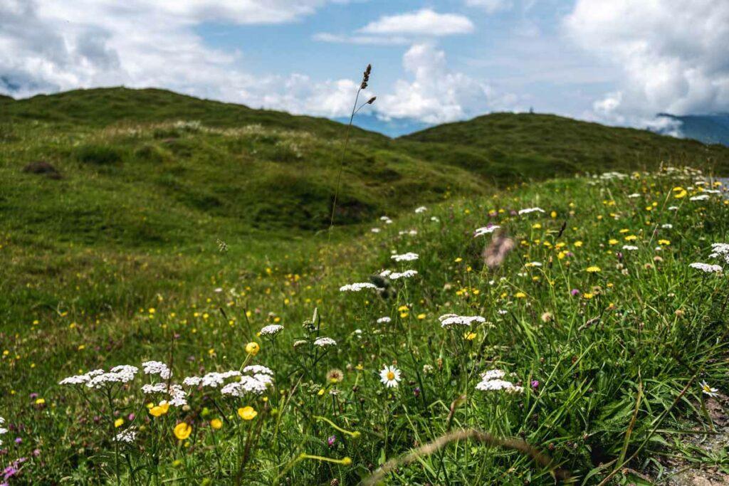 Blumen auf dem Koasa Trail