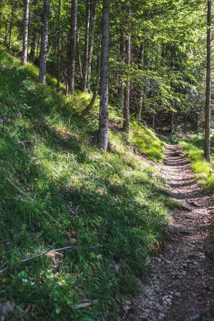 Waldstück vor der Stubnalm