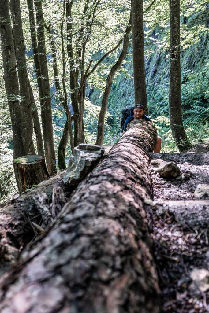 Waldstück im Stripsenjochaufstieg