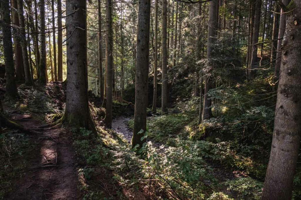 Wanderweg zum Eifersbacher Wasserfall durch den Wald