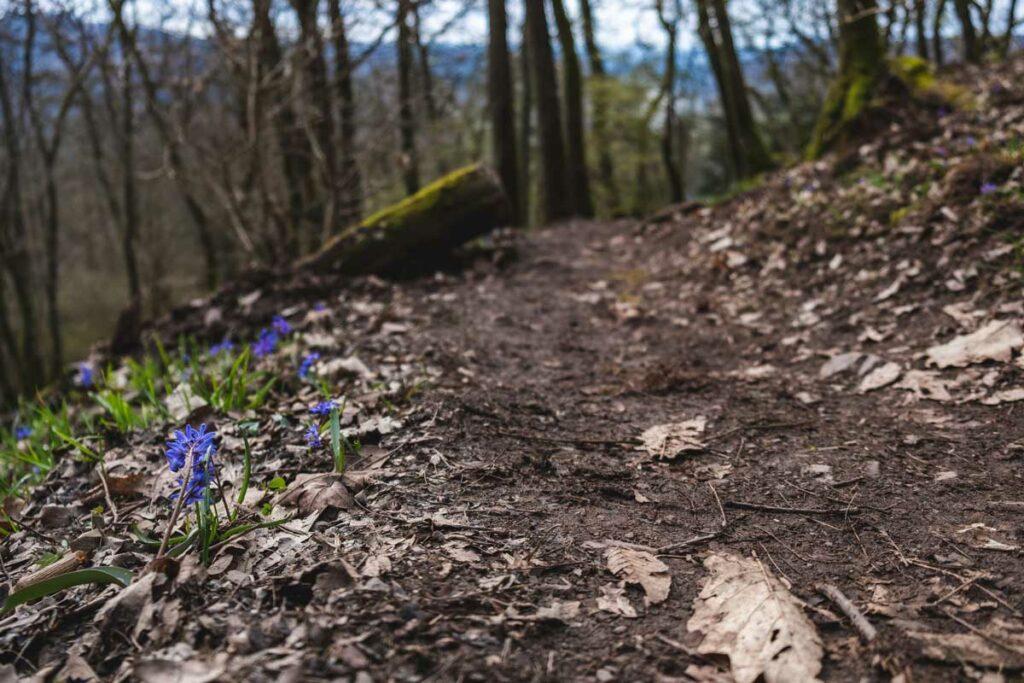 Calmont Klettersteig: Wandern an der Mosel 7